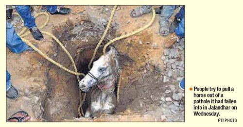 Horse being rescued from a ditch